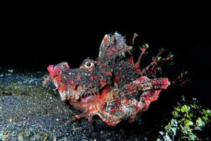 Dive Lembeh Strait and Bunaken in North Sulawesi
