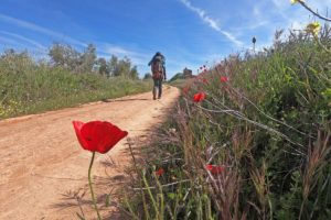 A detailed guide to the Via de la Plata, Camino de Santiago