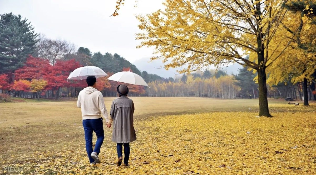 Nami Island Travel Guide: Cruise, Itinerary, How to get there and more