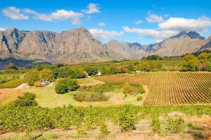 Amazing things to do in Stellenbosch, South Africa