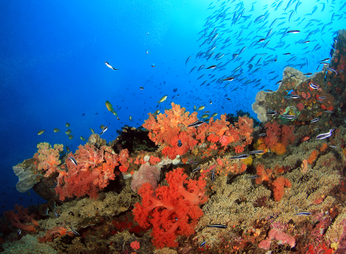 Philippines: 10 Scuba Diving Destinations You Can't Miss Out On