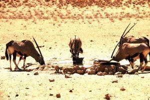 The Ultimate Kgalagadi Transfrontier Park Safari Guide