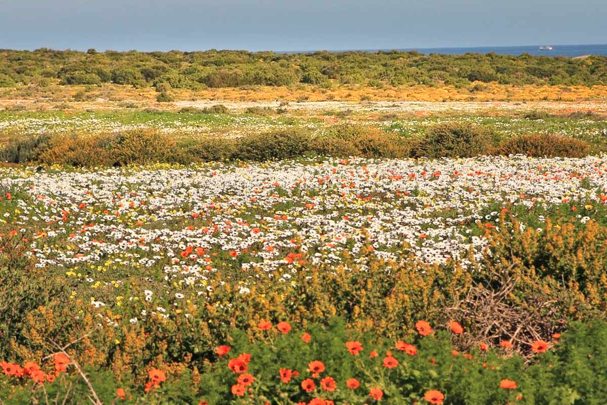 Namaqualand, exploring the West Coast Flower Route