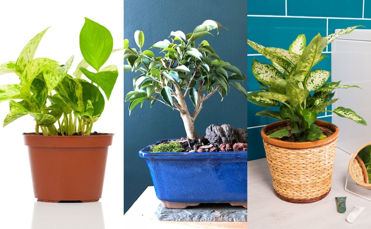 Indoor Plants that Purify: Top 5 Houseplants That Can Help You Breathe Better