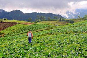 Find Yourself in the Cordilleras: The Farm Tourism Circuit of Benguet and Mountain Province
