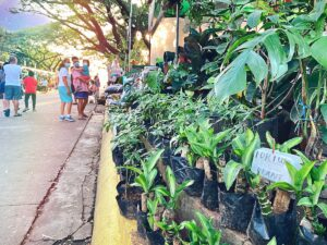 Quezon City Memorial Circle Plant Market: Where to buy Houseplants in Metro Manila?