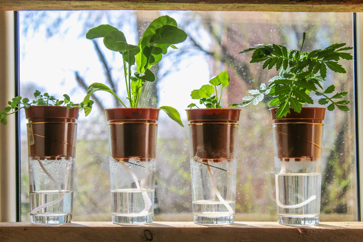 The 7 Best Self-watering Pots for Your Indoor Plants
