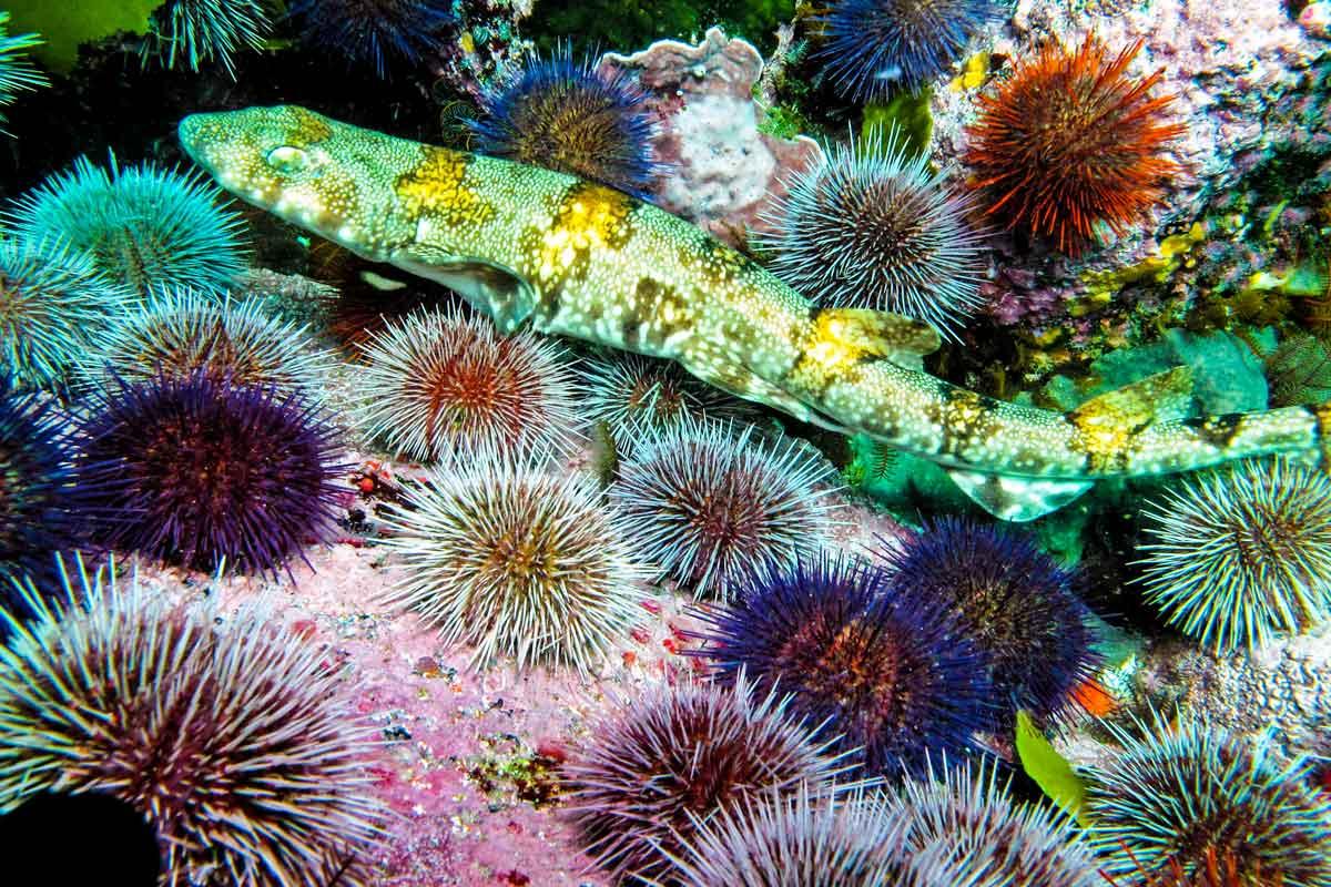 Scuba Diving Cape Town – a complete guide