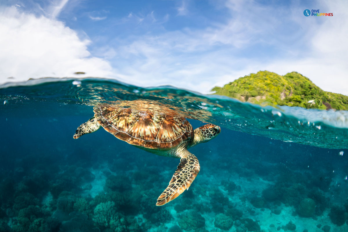 5 Philippine dive spots you can now head to